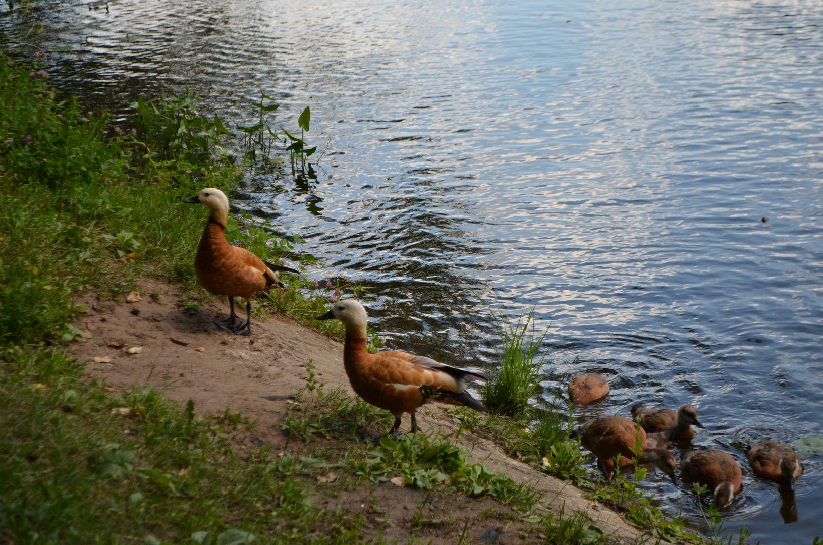 Большой Садовый пруд