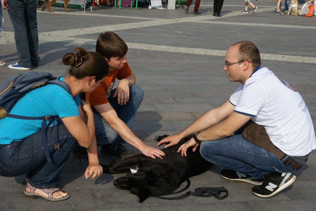 Выставка приюта «Собаки, которые любят»
