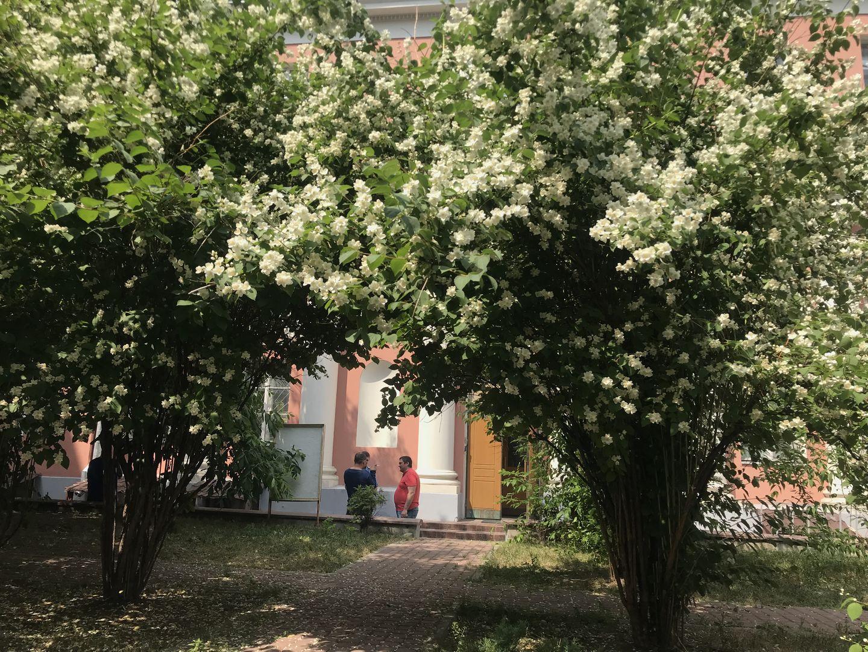 В 2019 году в Новокосине высадят более 130 деревьев и кустарников