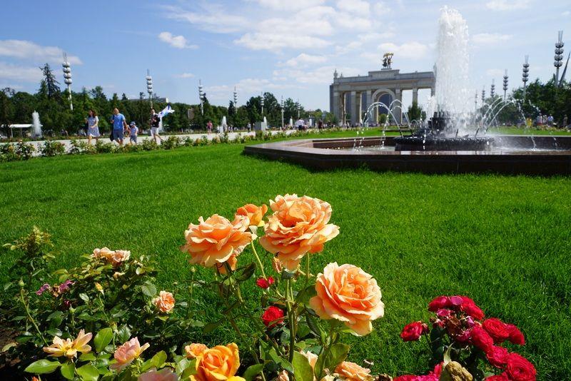 розы ВДНХ фонтан