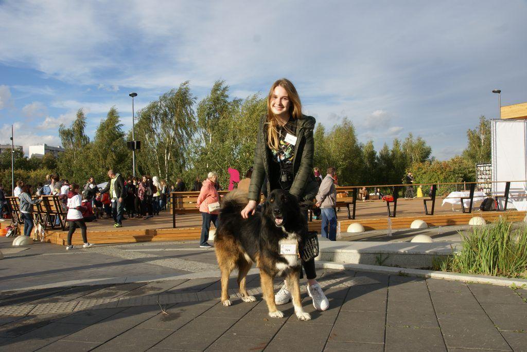 выставка собак