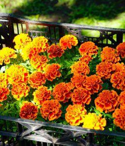 В ландшафтном парке ВДНХ высадили цветы