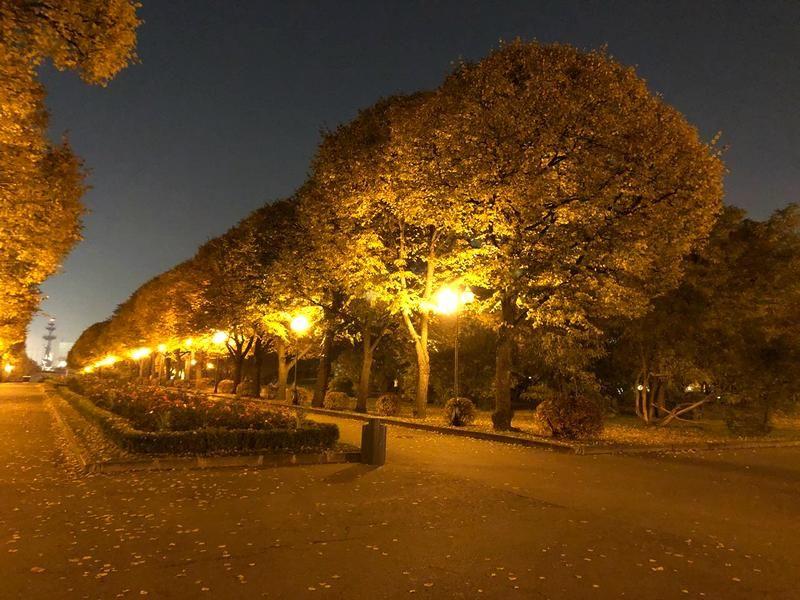 парк Горького осень