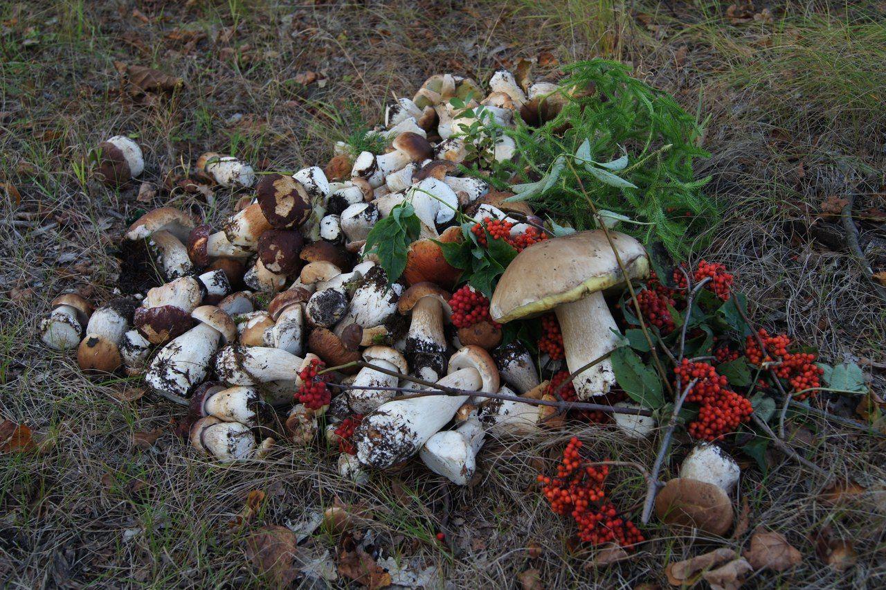 карта подмосковья где есть грибы