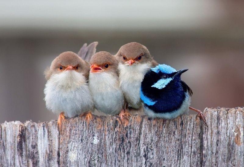 птицы дружат