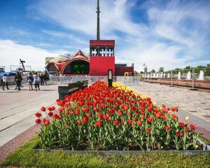 Тюльпаны в парке Победы