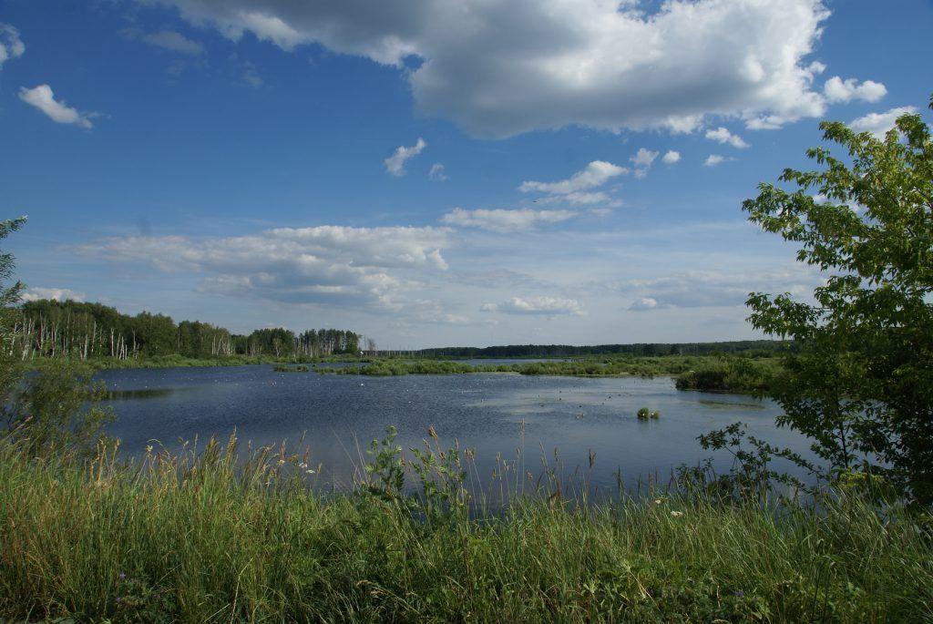 Верхне-яузский болотный комплекс