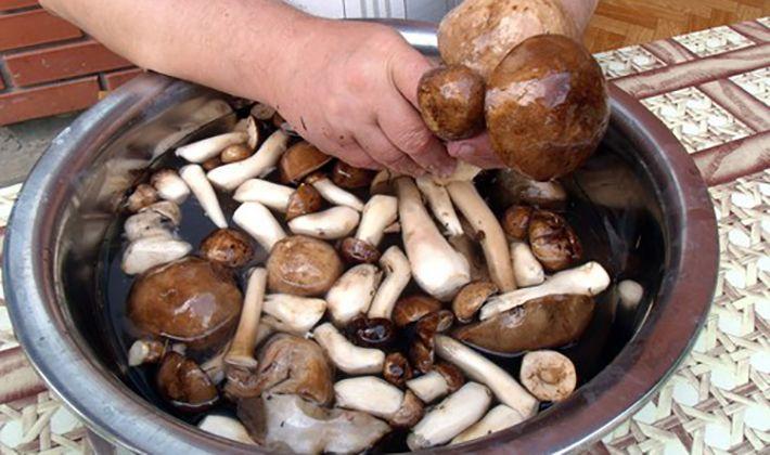 энергия из грибов