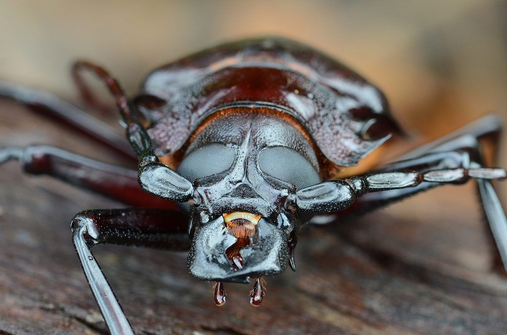 энергия из насекомых