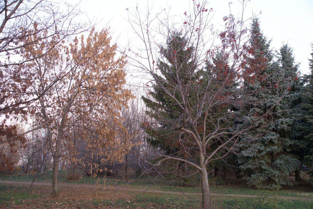Наше дерево