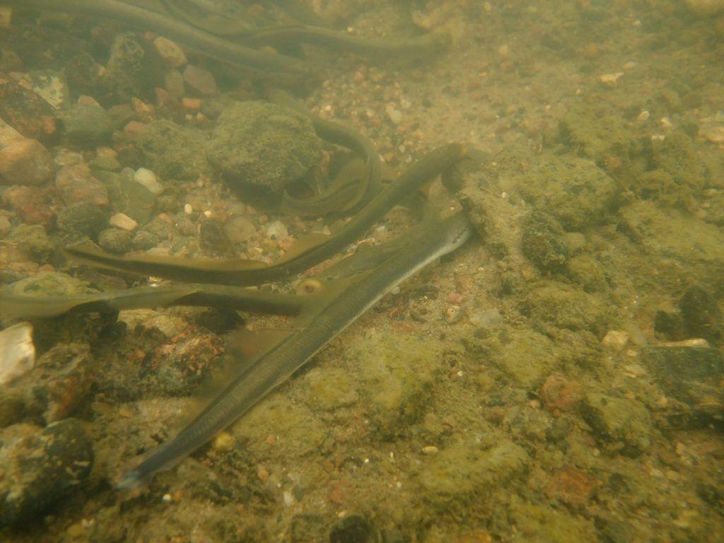 подземная речка Жабинка ручьевая минога нерест