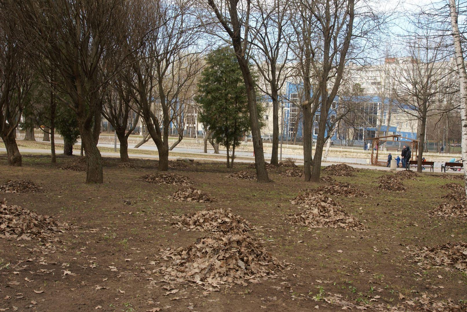 газон осенняя листва