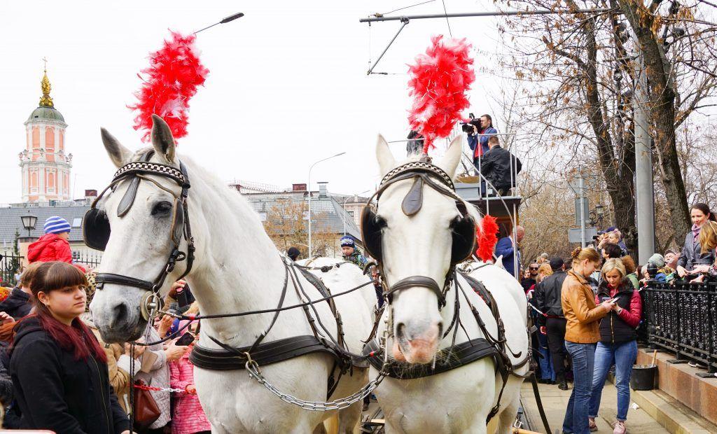парад трамваев пара белых лошадей