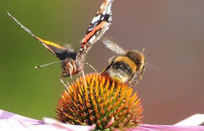 шмели и бабочки