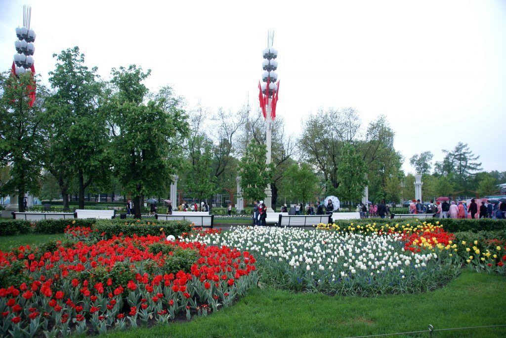 9 мая день победы цветы