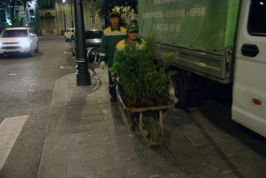 сотрудники компании перевозка кустов