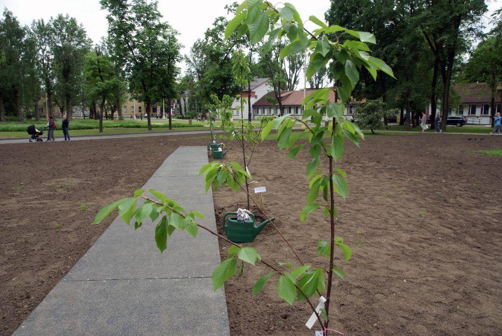 высадка деревьев сад молодоженов ВДНХ