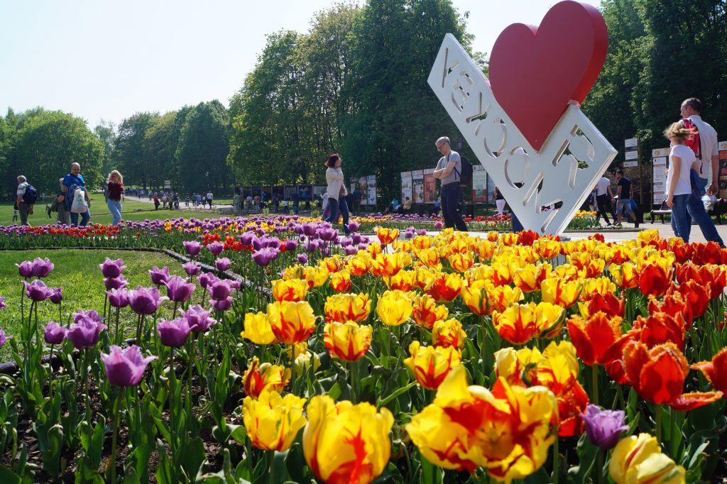 тюльпаны Коломенский парк