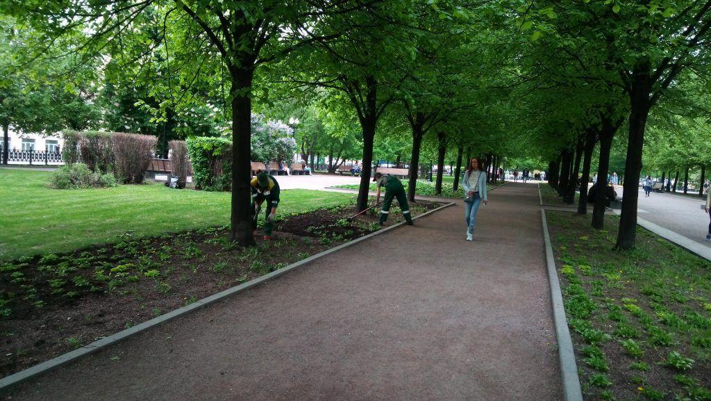 весна в Москве благоустройство озеленение деревья