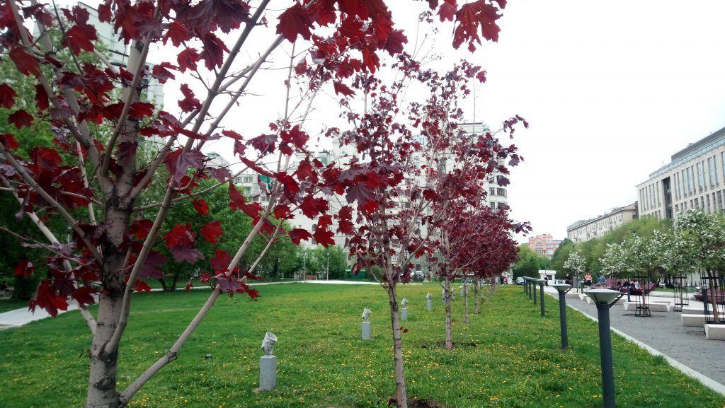 высадка деревьев озеленение