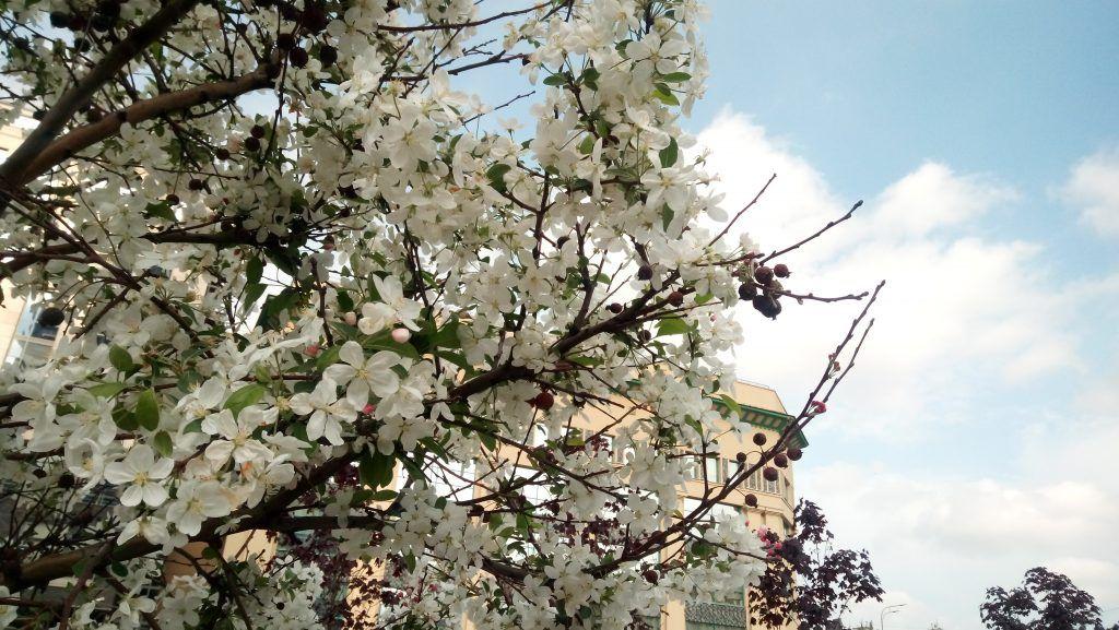 озеленение благоустройство деревья