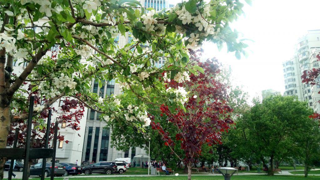 озеленение благоустройство деревья кусты