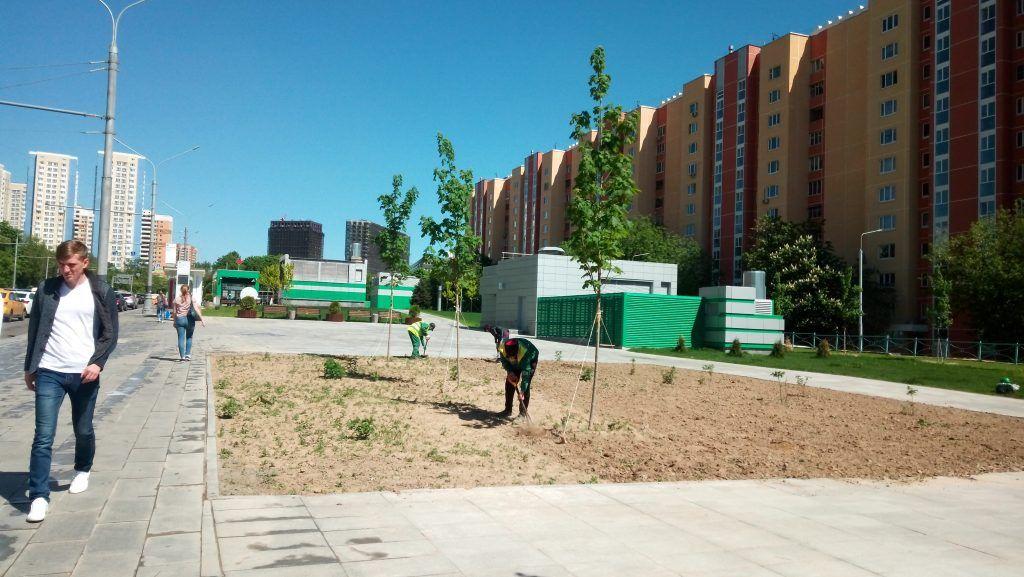 дополнительная защита корневой системы весна в Москве деревья