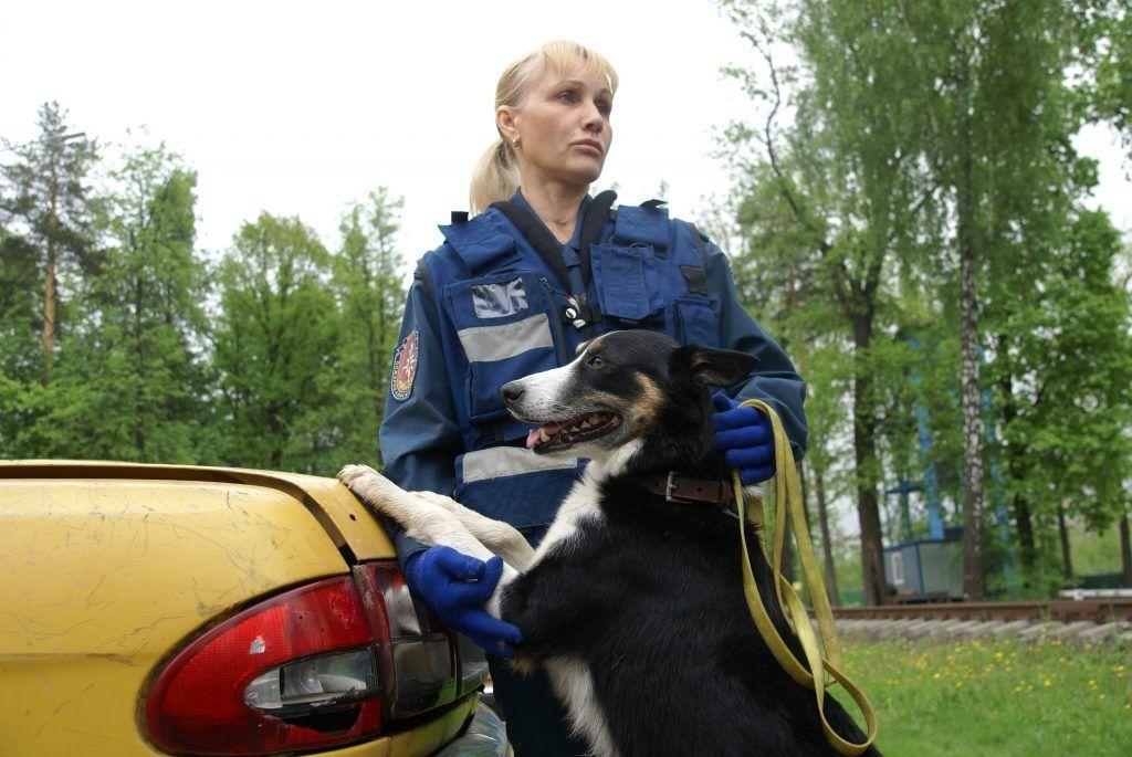 спасатель-кинолог собака