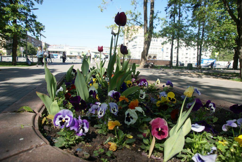 цветы весна в Москве украшение Москвы