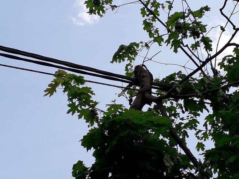 ураган дерево