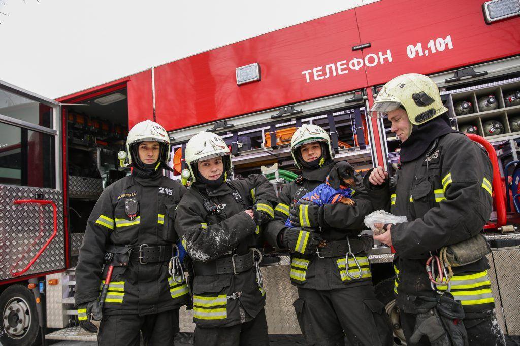 собака Маруся пожарные