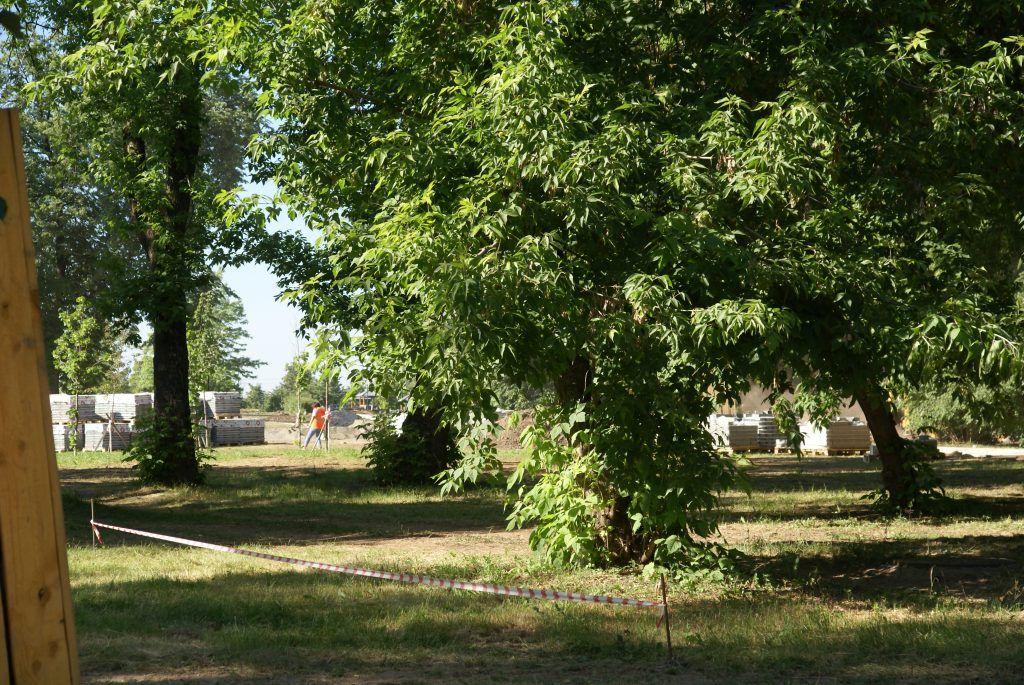Черкизовский пруд благоустройство реконструкция высадка деревьев озеленение