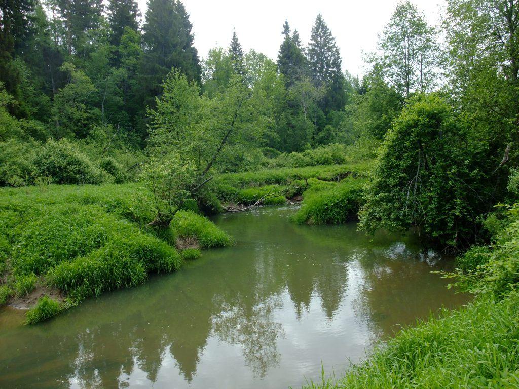 лес растения лето в Москве река