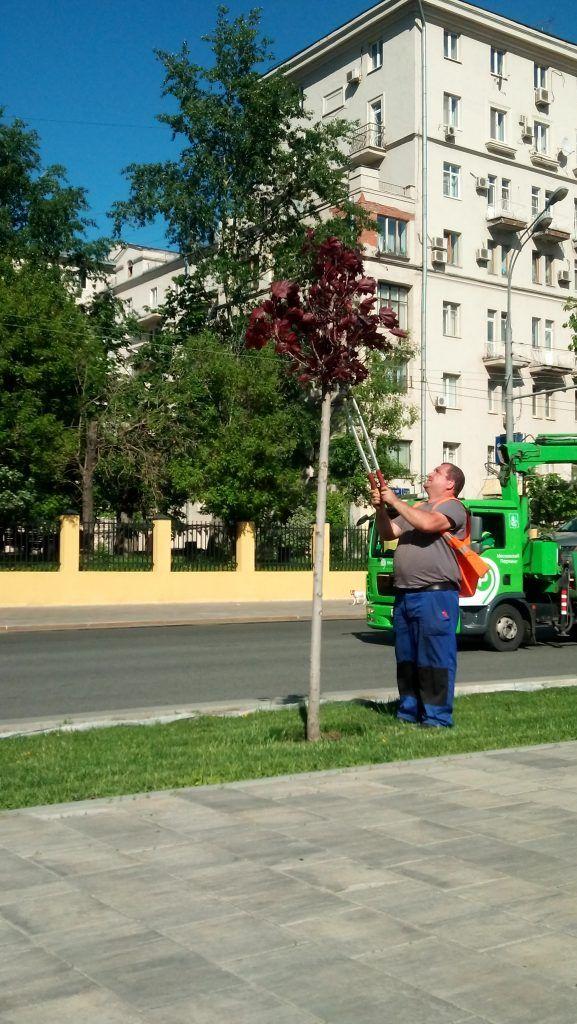благоустройство озеленение кустарники деревья уход за растениями