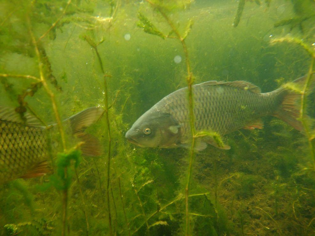 зона отдыха Строгинская пойма лето в Москве подводный мир рыбы