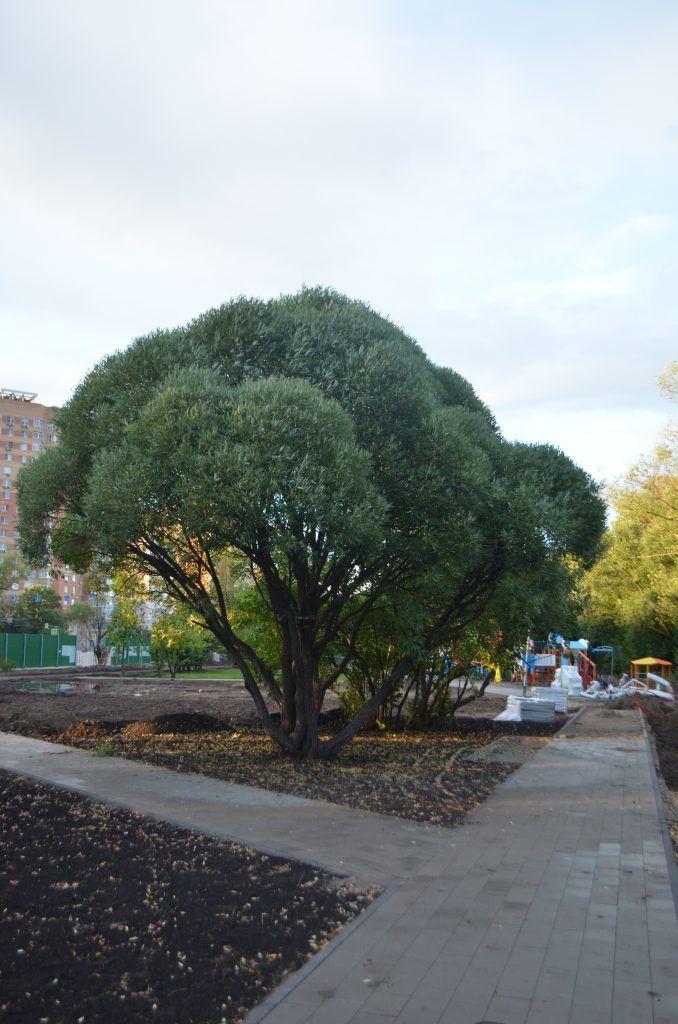 сквер на Большой Академической, детская площадка, газон, ива