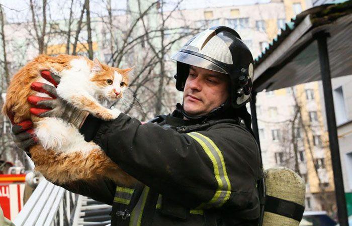 пожар котенок спасатели пожарные