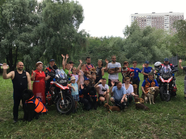 спасатели собаки