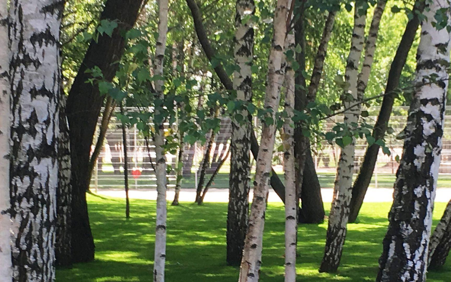 озеленение Капотня