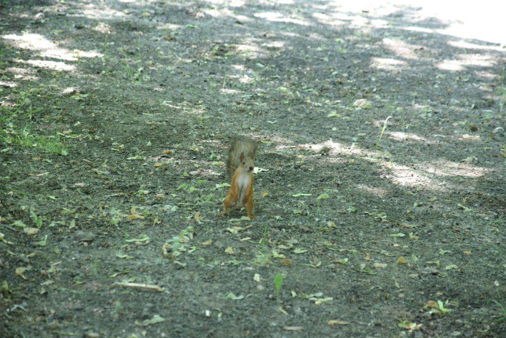усадьба Люблино благоустройство и озеленение парка «Усадьба Люблино» белка
