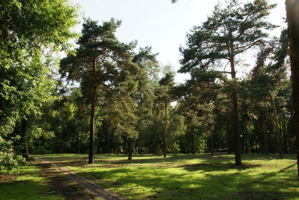 Детский Черкизовский парк благоустройство деревья