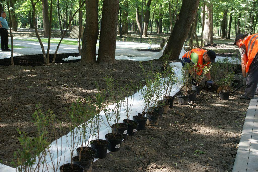 усадьба Люблино благоустройство и озеленение парка «Усадьба Люблино»