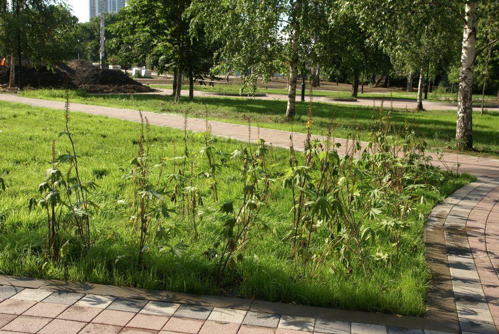 Детский Черкизовский парк благоустройство