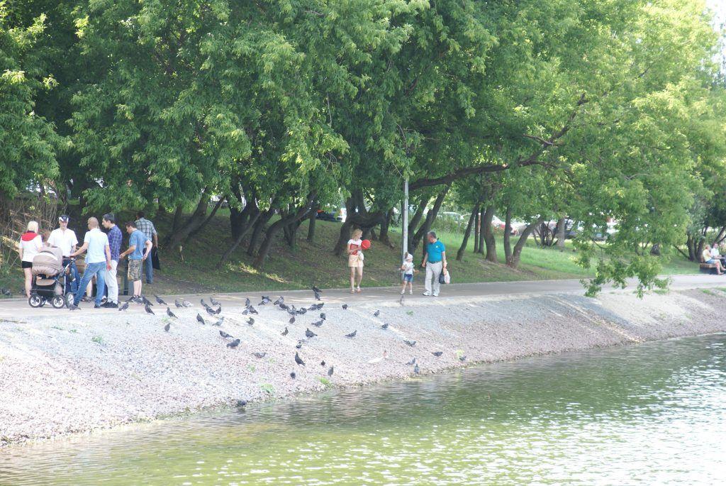 Солнцево Большой Солнцевский пруд благоустройство Центральный парк