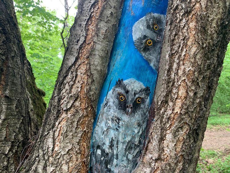 совы, рисунки на деревьях