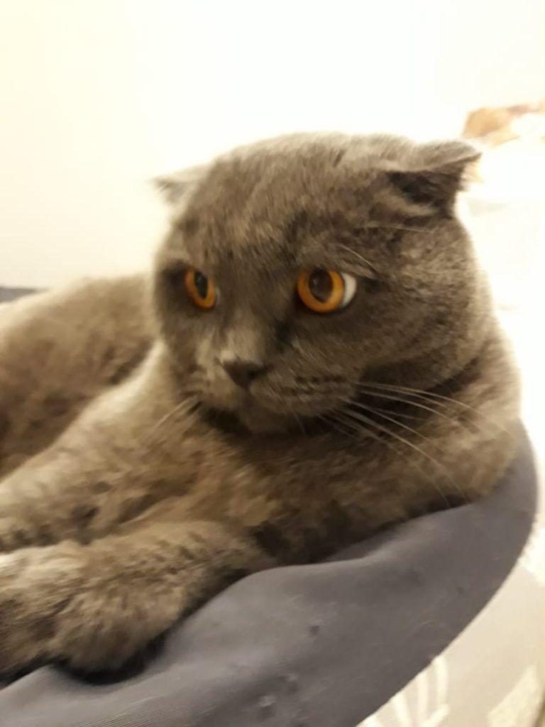 питомцы, кошка
