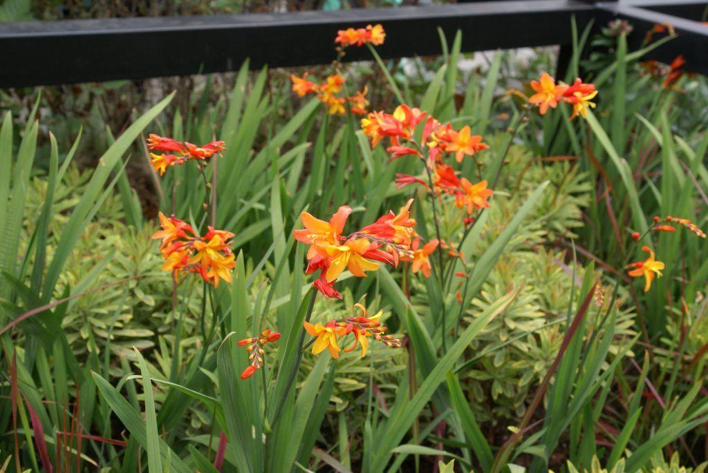 Сад «Архитектура природы» фестиваль Цветочный джем