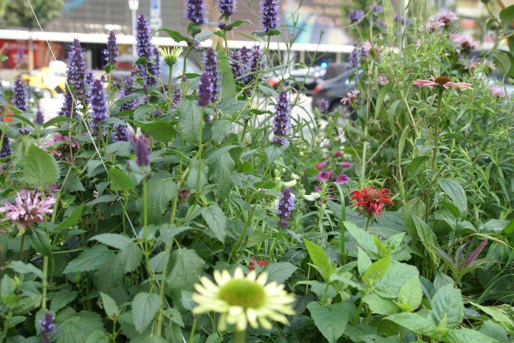 сад «Шелковый путь» фестиваль Цветочный джем