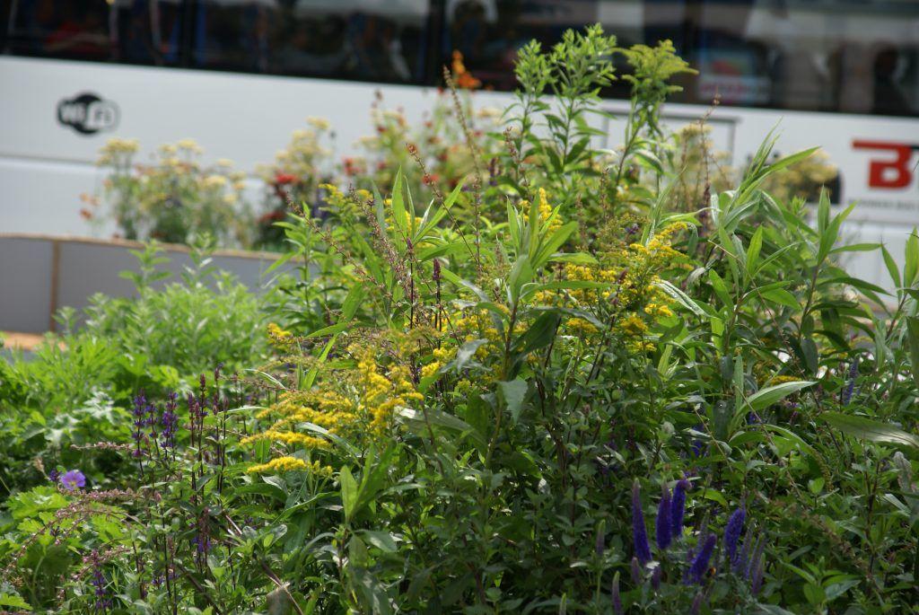 сад «Rock Garden», Дэмиен Мишель, Цветочный Джем, ИТАР-ТАСС, цветы