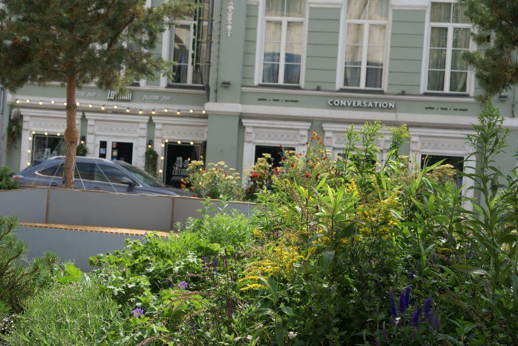 сад «Rock Garden», Дэмиен Мишель, Цветочный Джем, ИТАР-ТАСС, цветы, растения